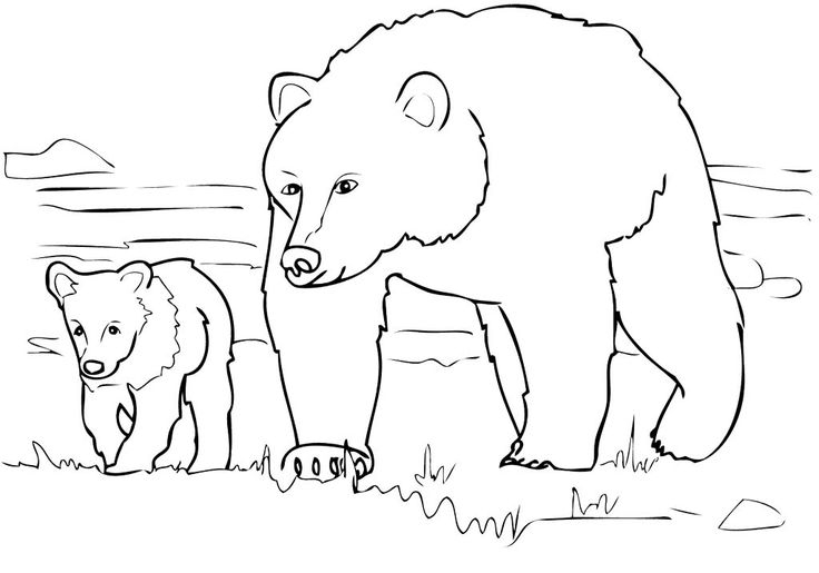 grizzly bear coloring page - grizzly bear sketch templates