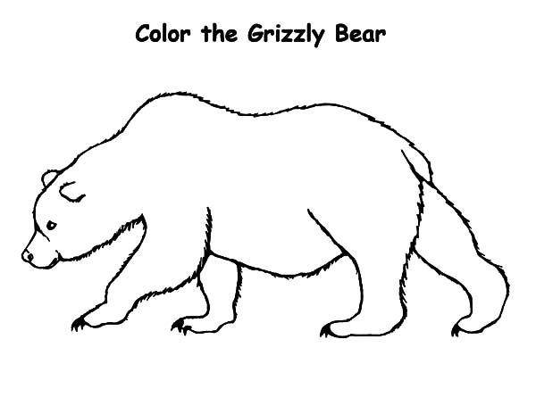 grizzly bear coloring page - small grizzly bear coloring pages sketch templates