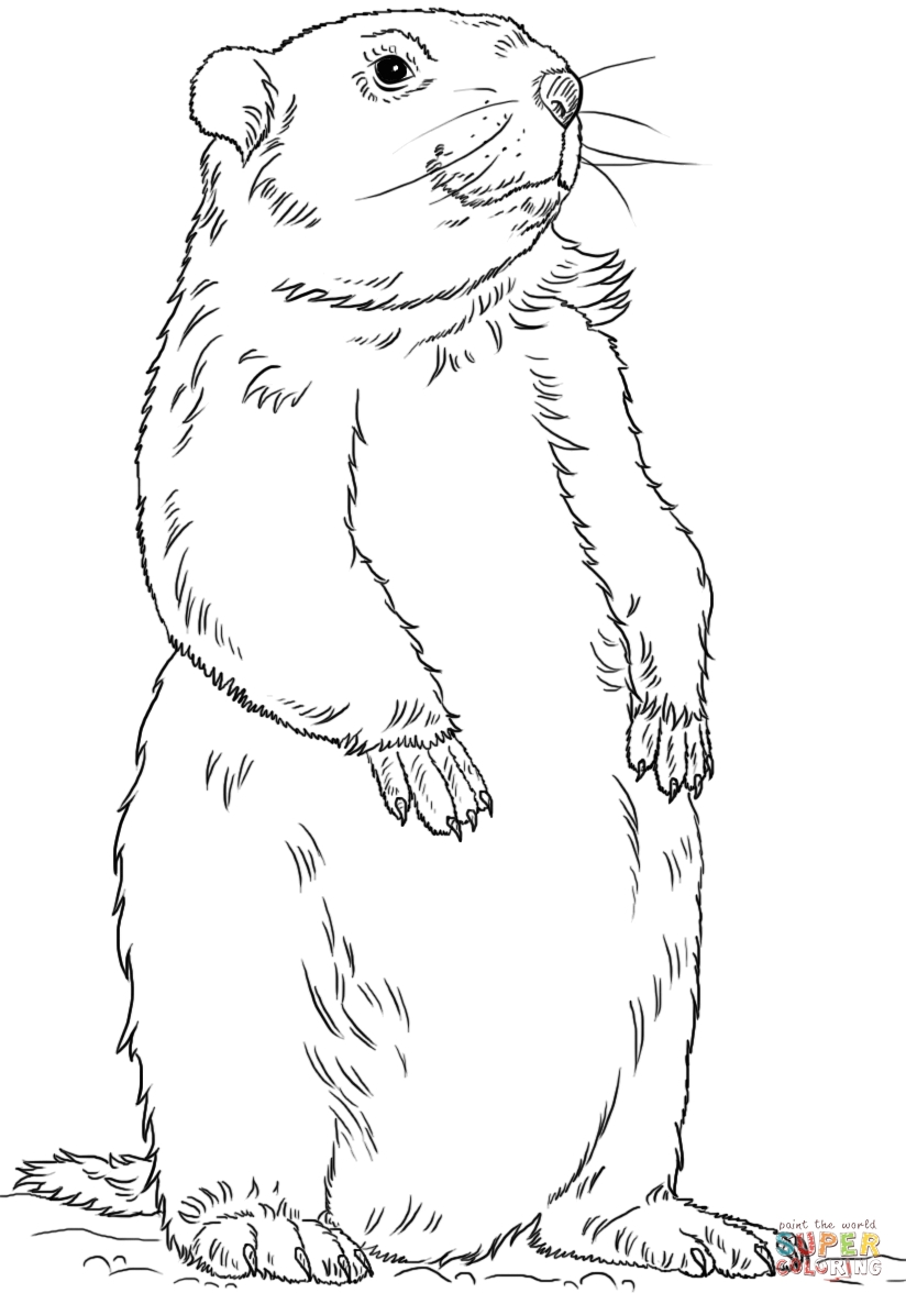 23 Groundhog Coloring Page Collections | FREE COLORING PAGES
