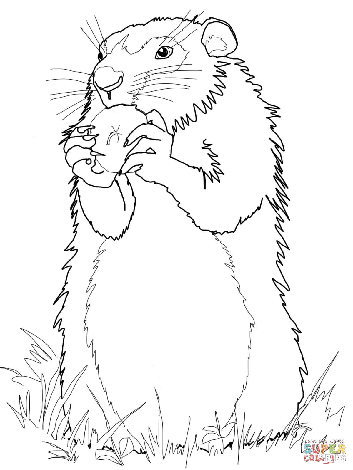 groundhog coloring page - 2