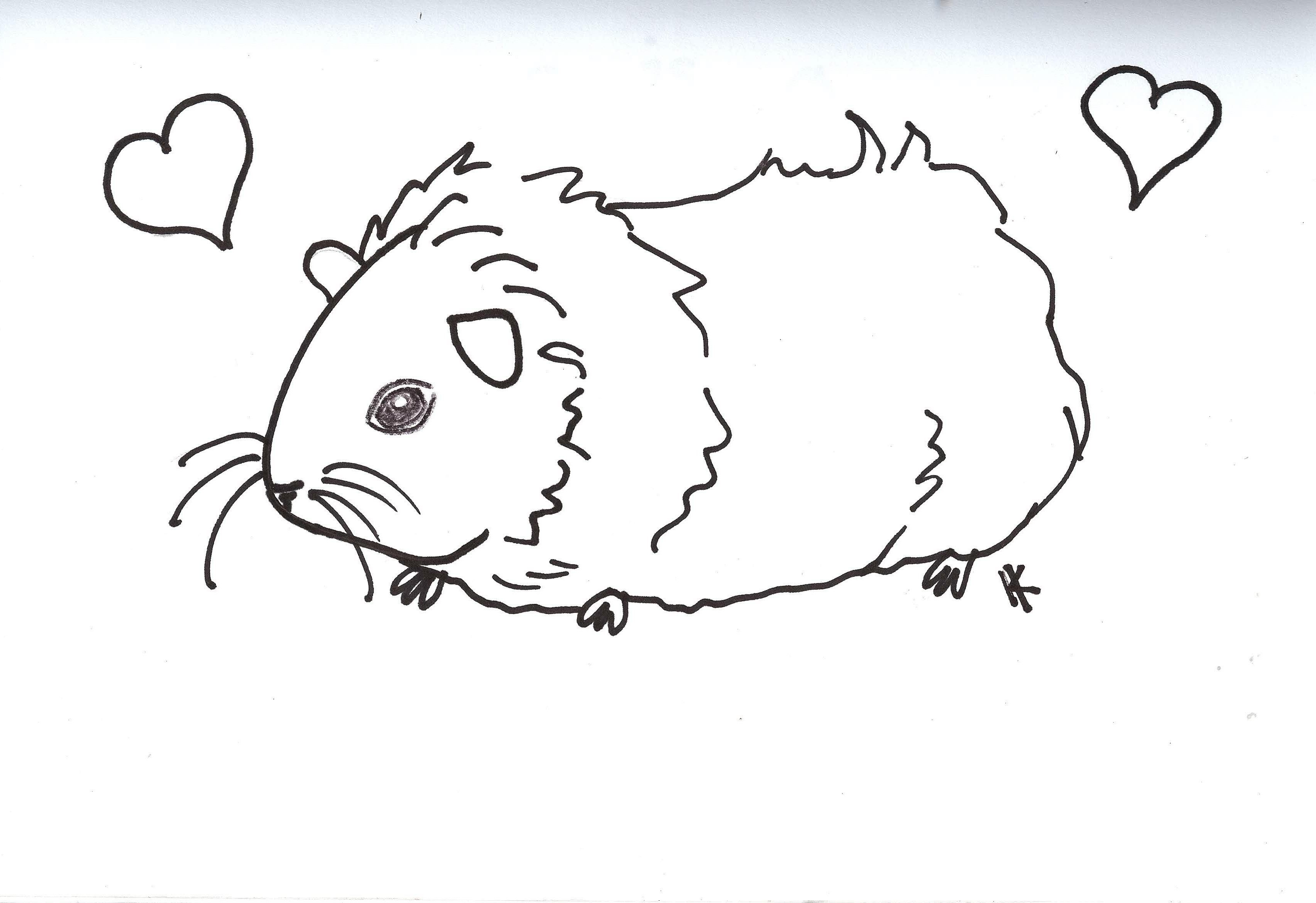 guinea pig coloring pages - q=guinea pig