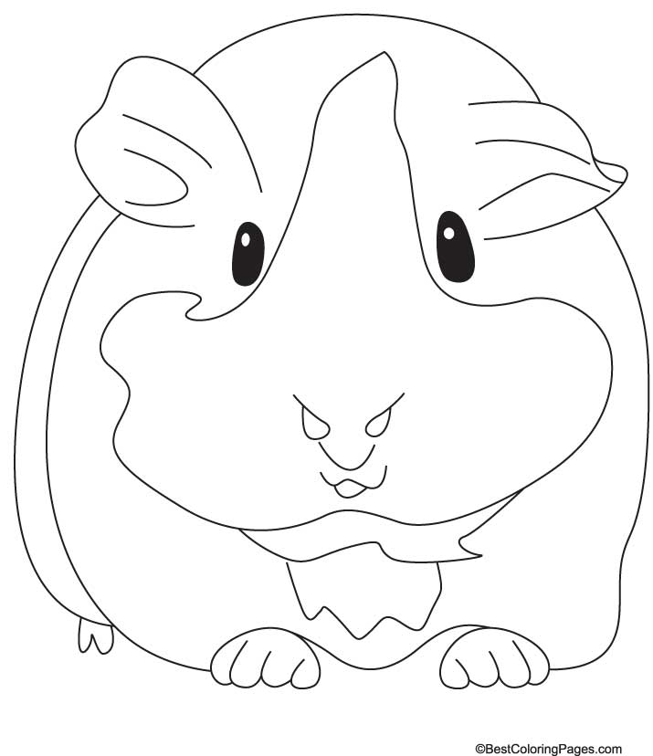 Guinea Pig Coloring Pages - Groaning Guinea Pig Coloring Pages