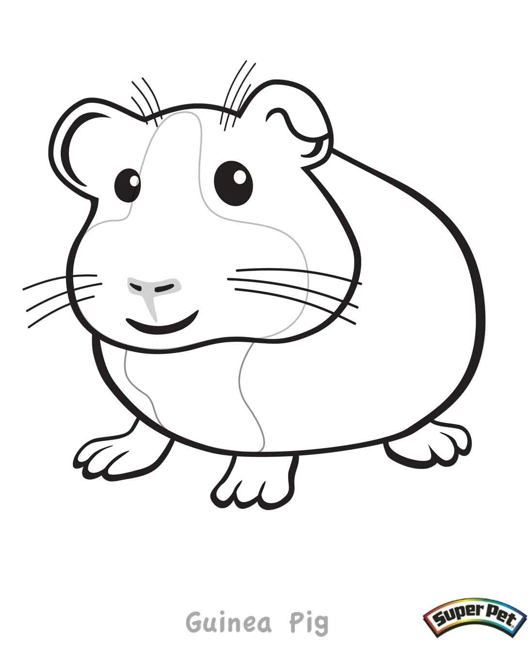 guinea pig coloring pages - guinea pig coloring pages
