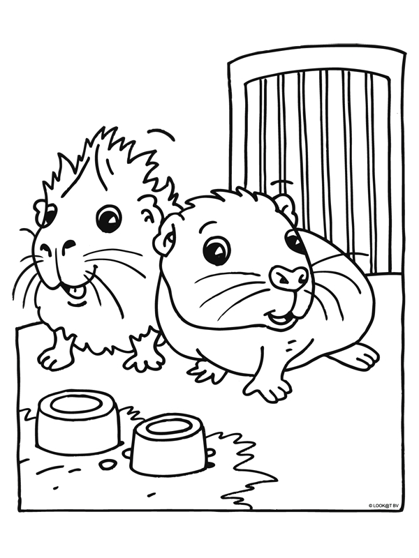 guinea pig coloring pages - guinea pig
