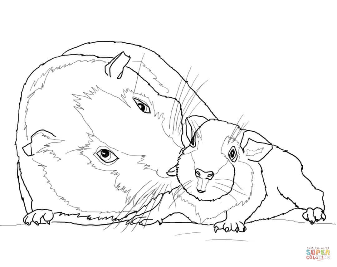 guinea pig coloring pages - guinea pig mother and baby
