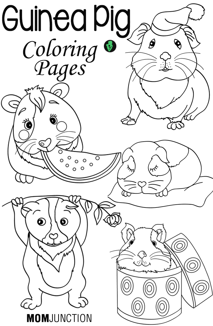 guinea pig coloring pages - guinea pig coloring pages for your toddlers