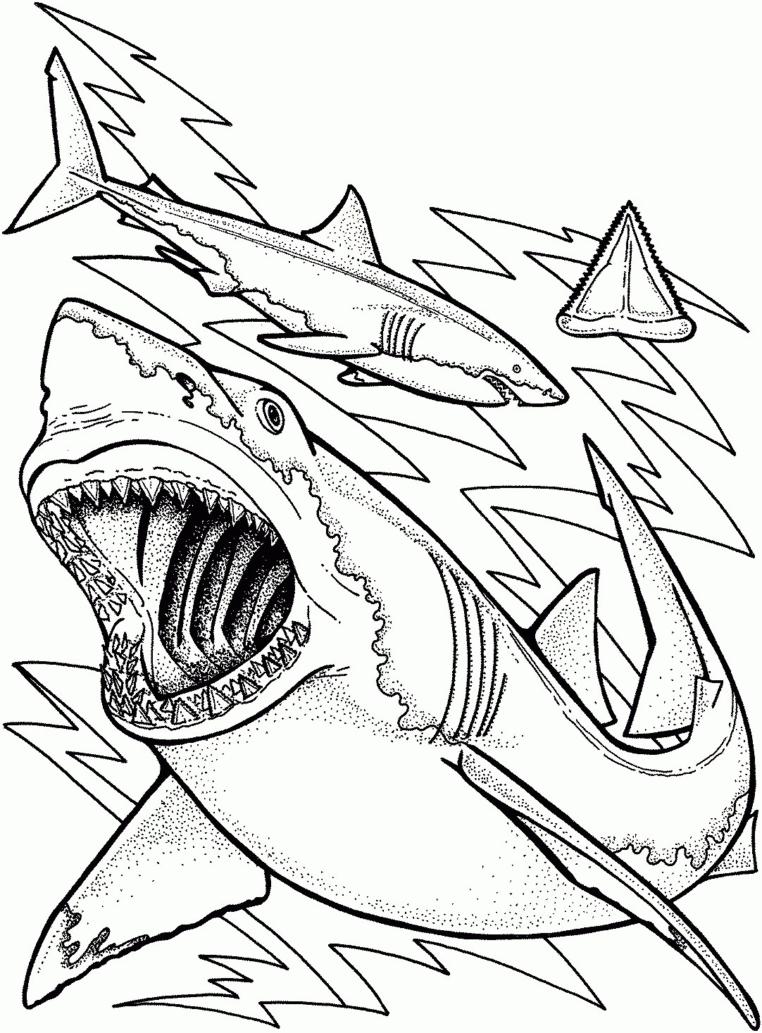 Hammerhead shark coloring page shark coloring page