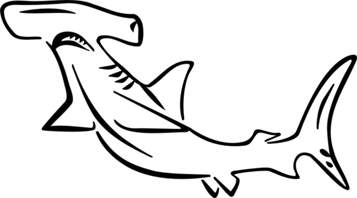 hammerhead shark coloring page - index main page=product info&products id=205