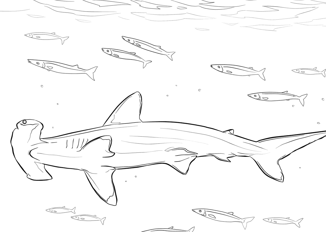 28 Hammerhead Shark Coloring Page Compilation   FREE COLORING PAGES ...