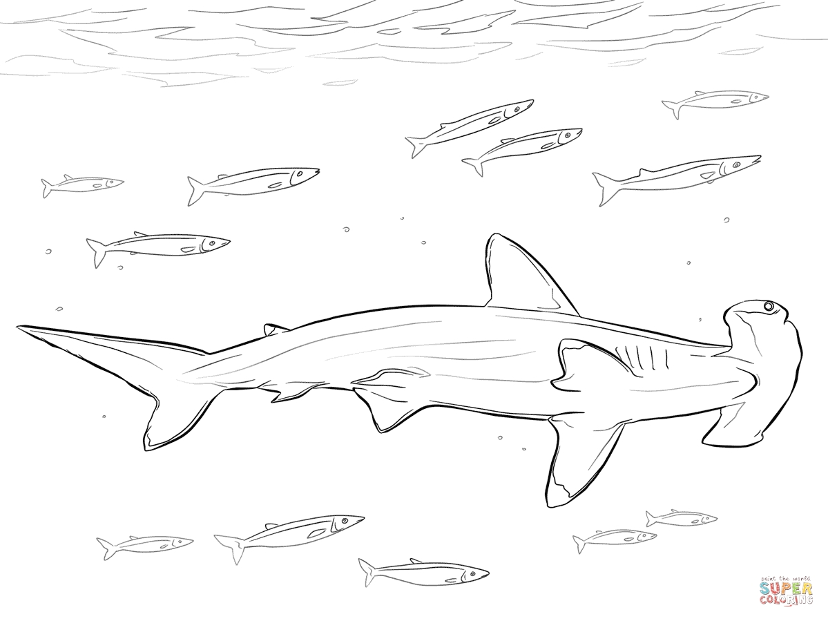 hammerhead shark coloring page - hammerhead shark with pilot fishes