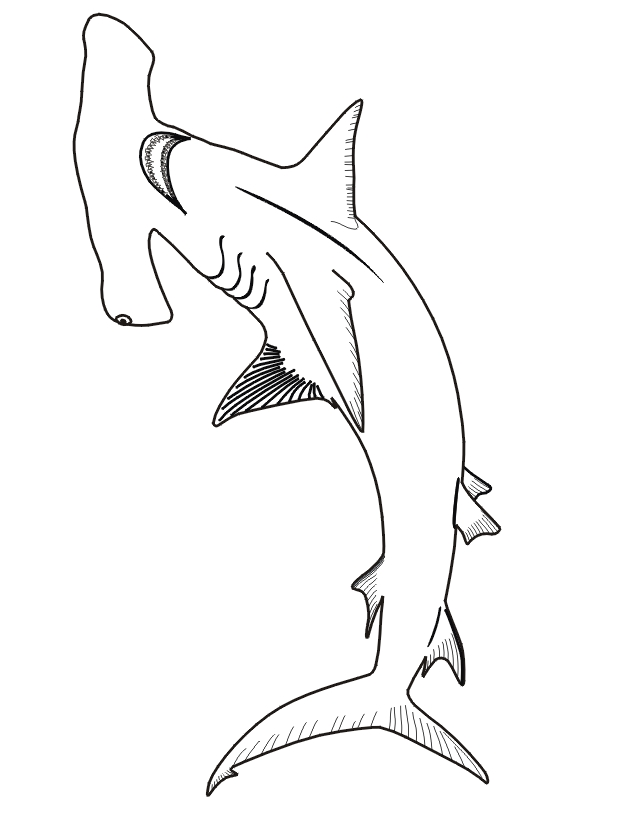 hammerhead shark coloring page - Real Hammerhead 1