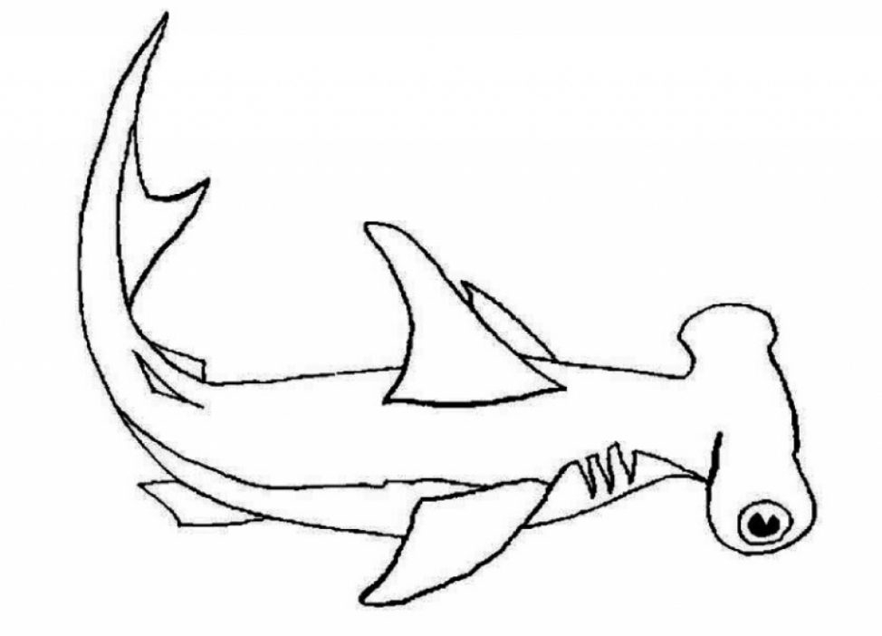 Hammerhead Shark Coloring Page