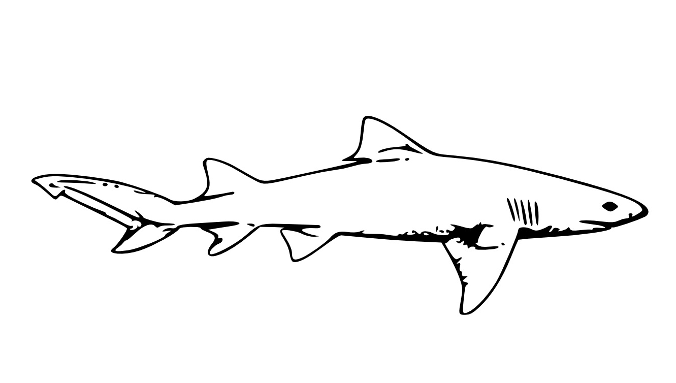 28 hammerhead shark coloring page compilation free for Hammerhead shark coloring pages