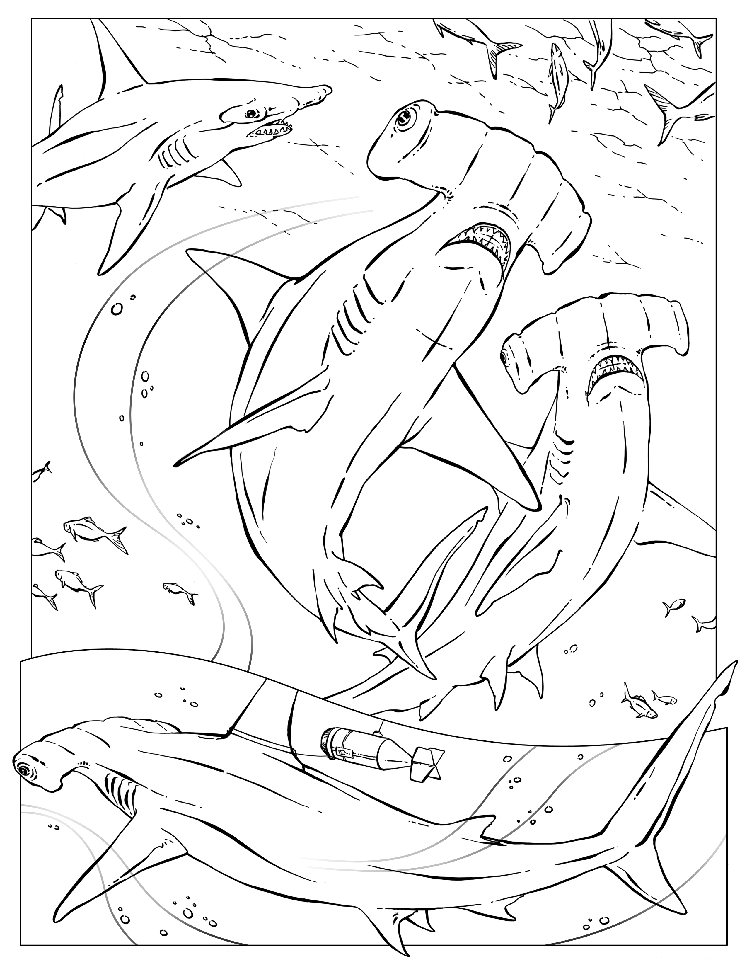 hammerhead shark coloring page - hammerhead shark coloring pages to print