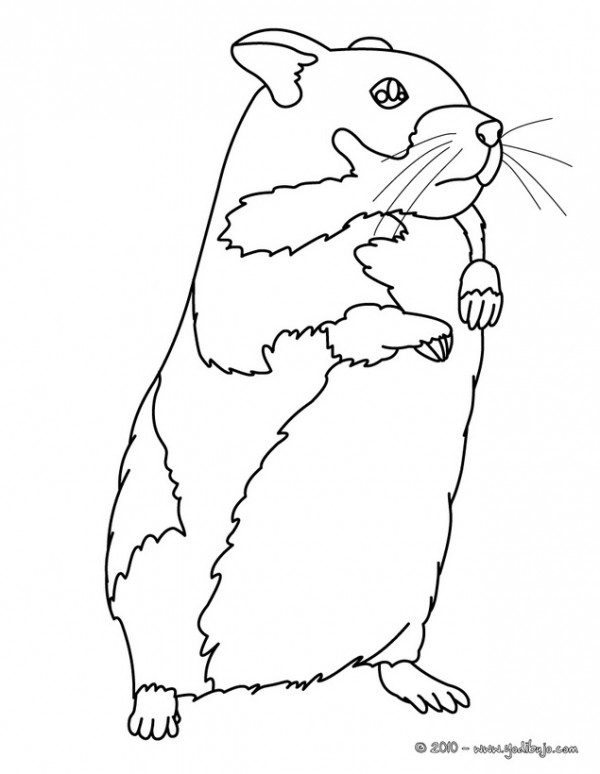 28 Hamster Coloring Pages Selection | FREE COLORING PAGES