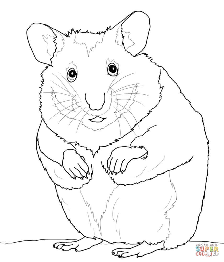 hamster coloring pages - hamsters
