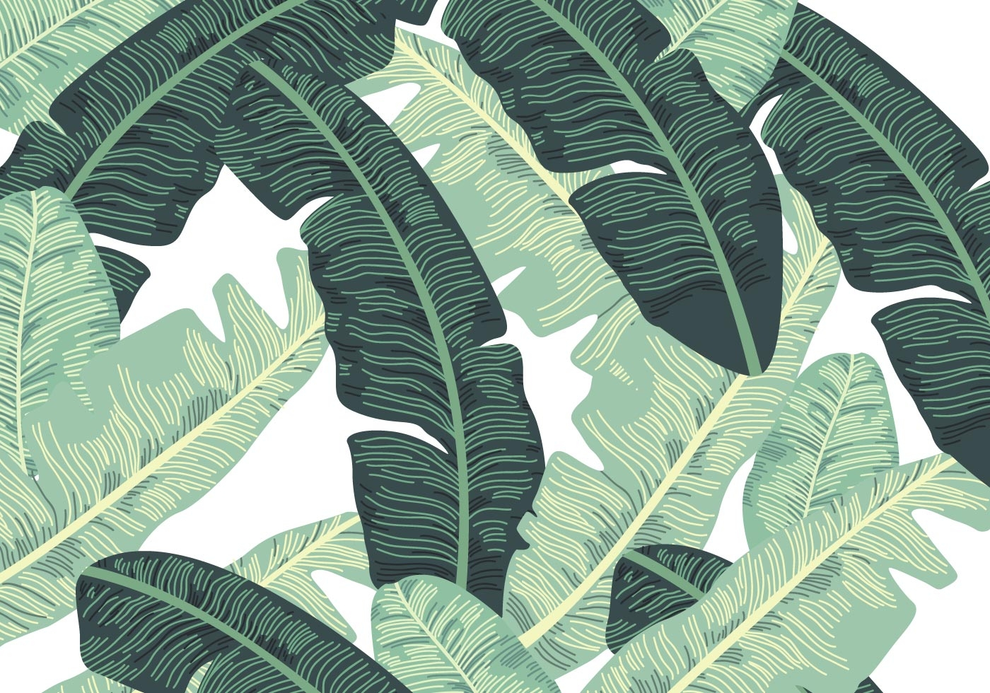 hawaii coloring pages - banana leaf