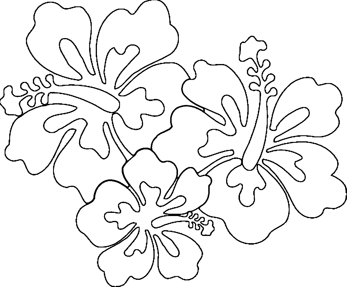 hawaiian flower coloring page - hawaiian flowers coloring page