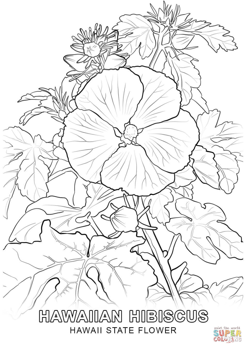 27 Hawaiian Flower Coloring Page Images Free Coloring Pages Part 2