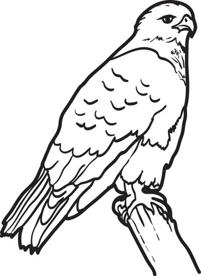 hawk coloring pages - big hawk coloring page for kids