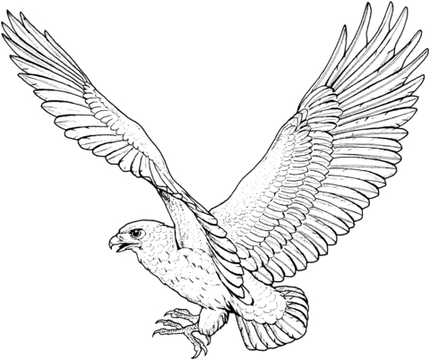 hawk coloring pages - hawk 5