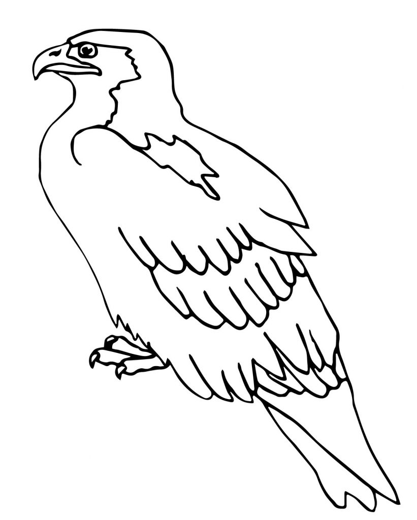 20 Hawk Coloring Pages Images Free Coloring Pages Part 3