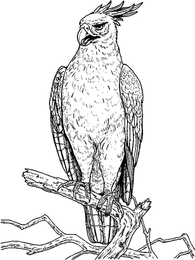 Hawk Coloring Pages - Hawk Coloring Pages Download and Print Hawk Coloring Pages