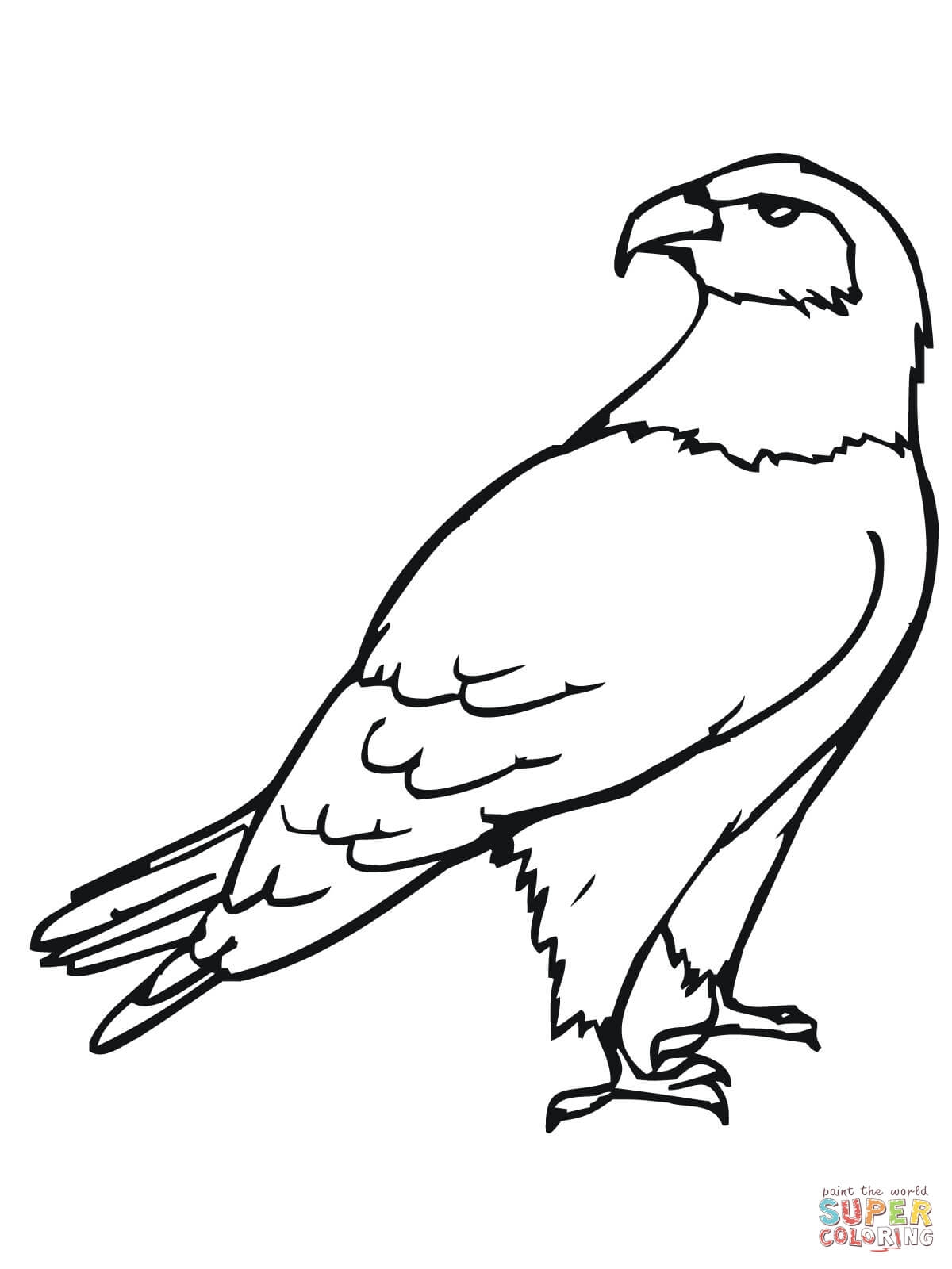 hawk coloring pages - hawks