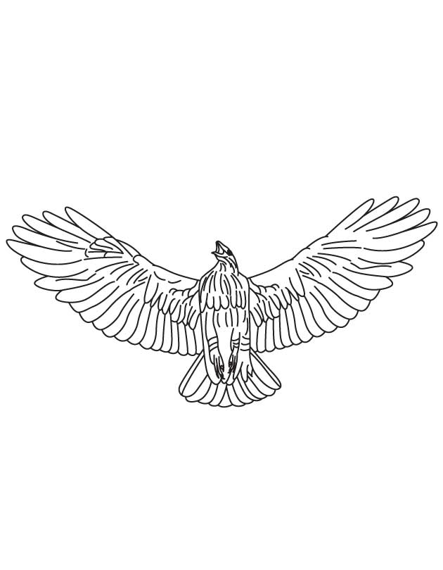 20 Hawk Coloring Pages Images FREE COLORING PAGES Part 2
