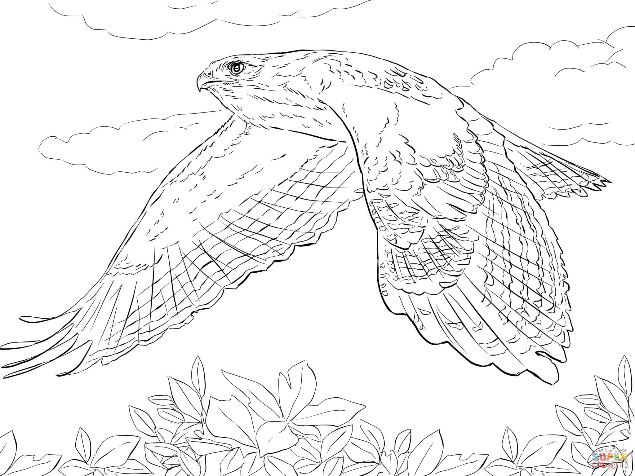 hawk coloring pages - tony hawk coloring pages free sketch templates