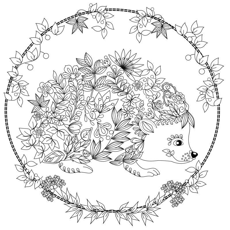 hedgehog coloring page -