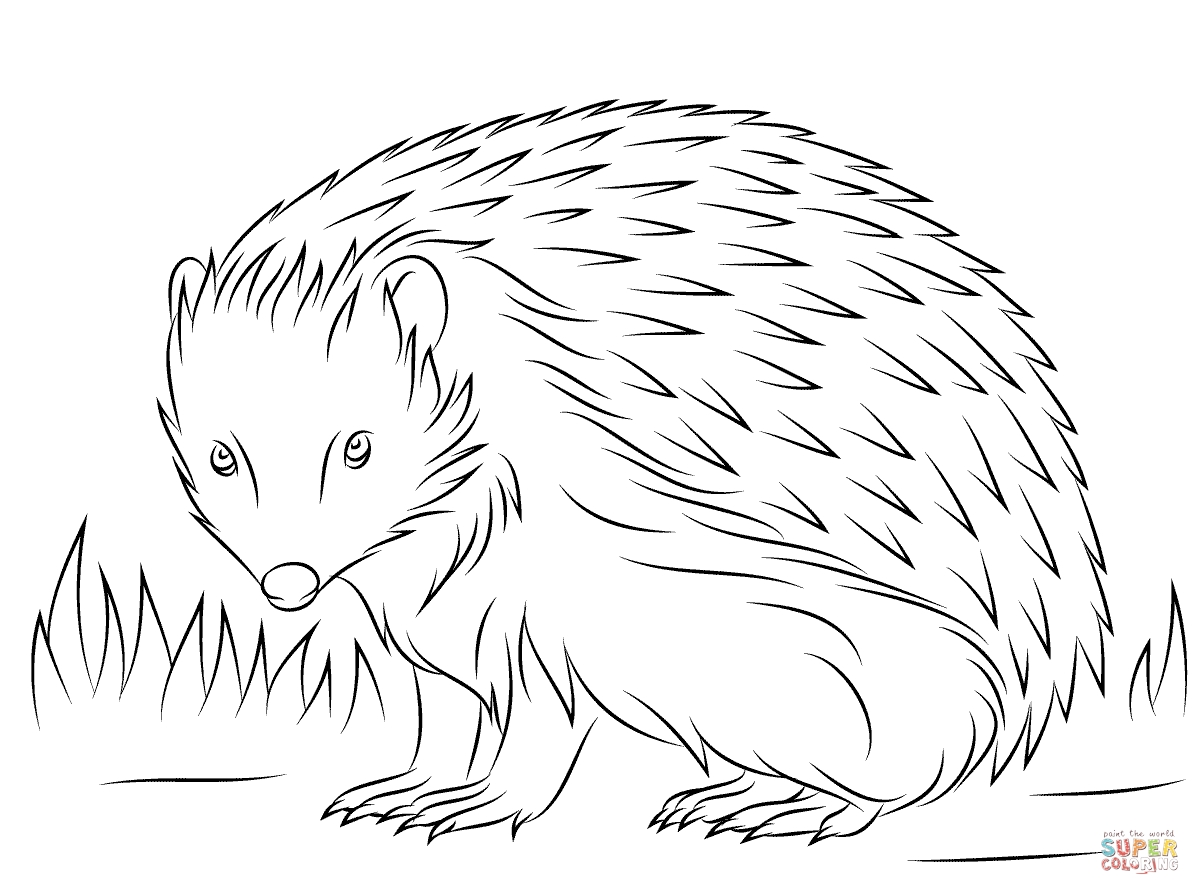 hedgehog coloring page - show=Hedgehog