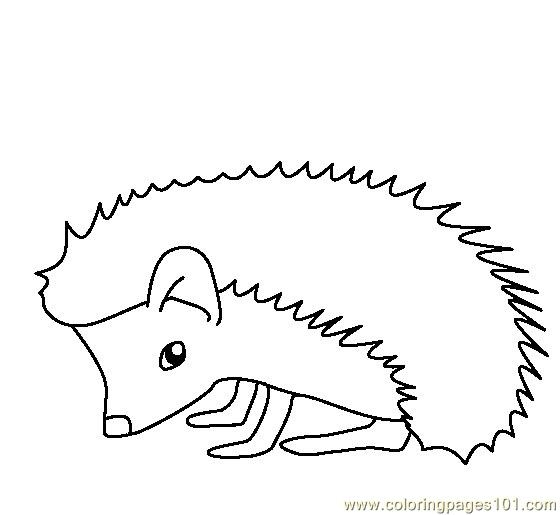 hedgehog coloring page - Hedgehog