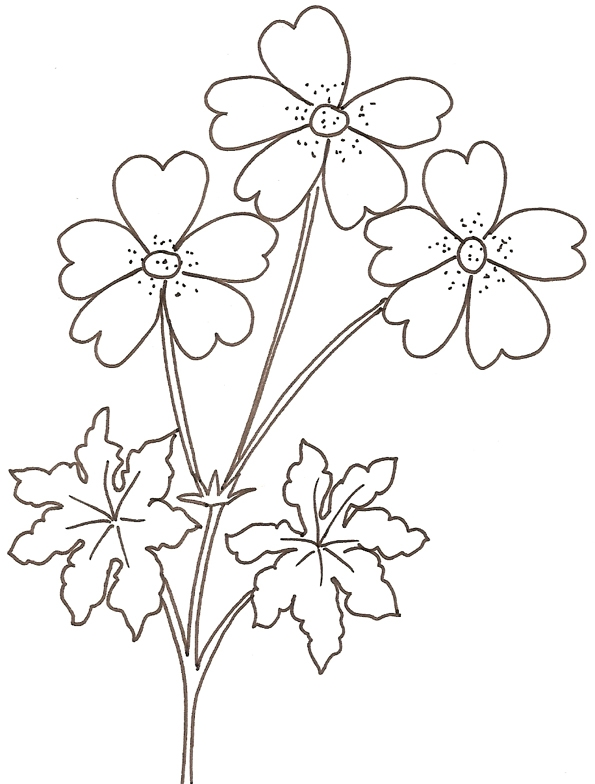 hibiscus coloring page - coloriage fleur