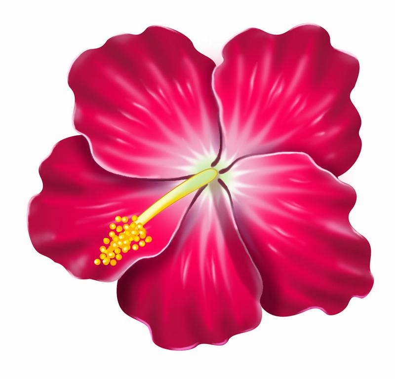 hibiscus coloring page - hibiscus cliparts