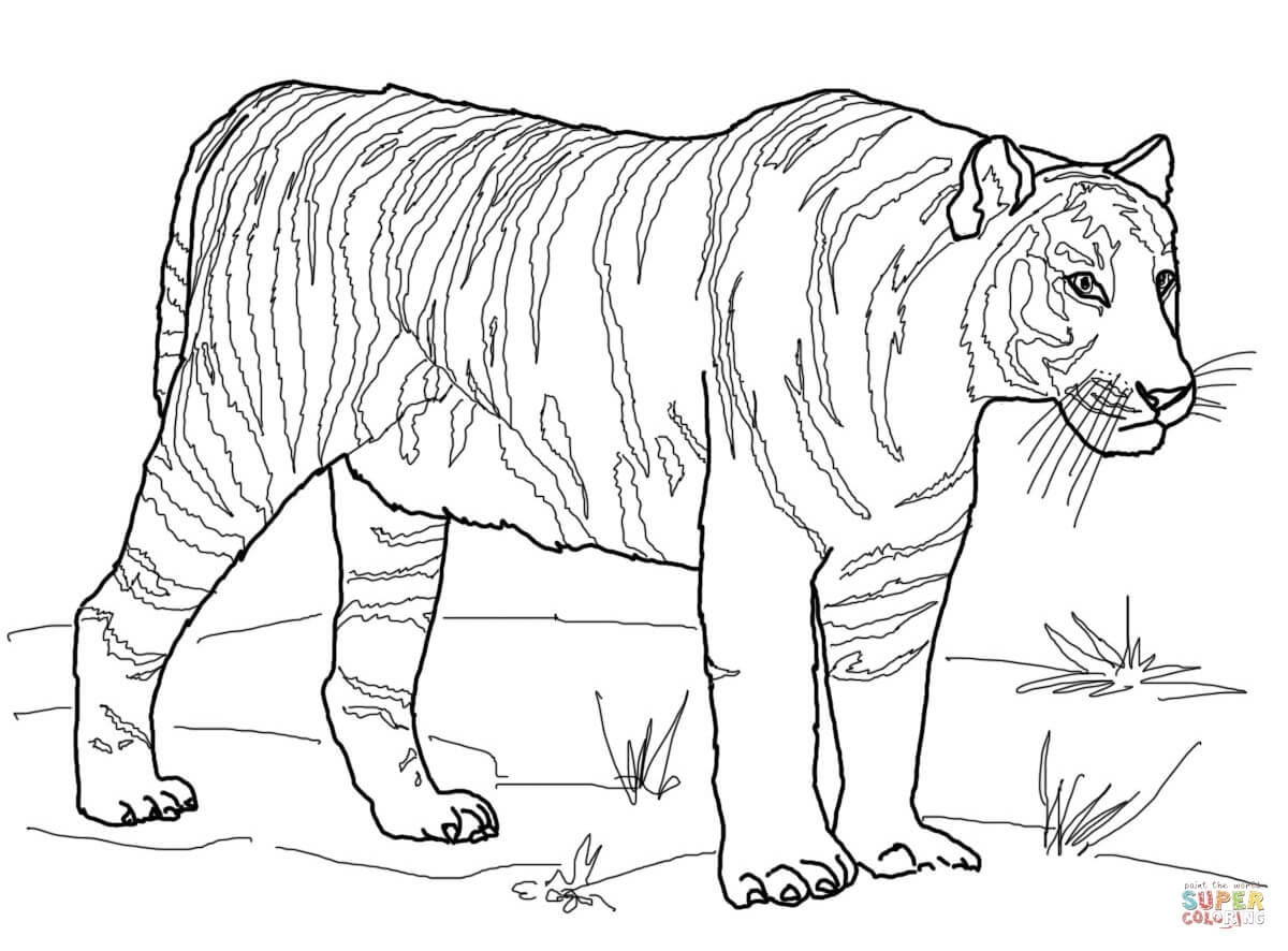hippo coloring pages - clemson tigers coloring pages tigers coloring pages free coloring pages