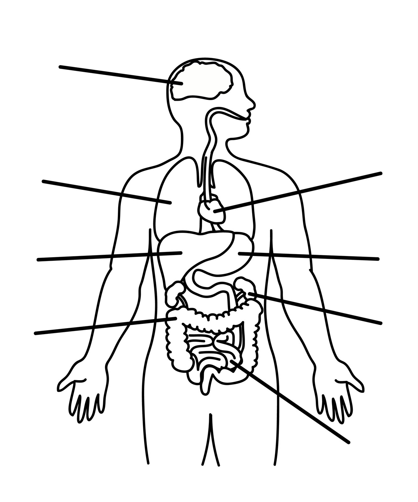 human body coloring pages - drawing human body coloring