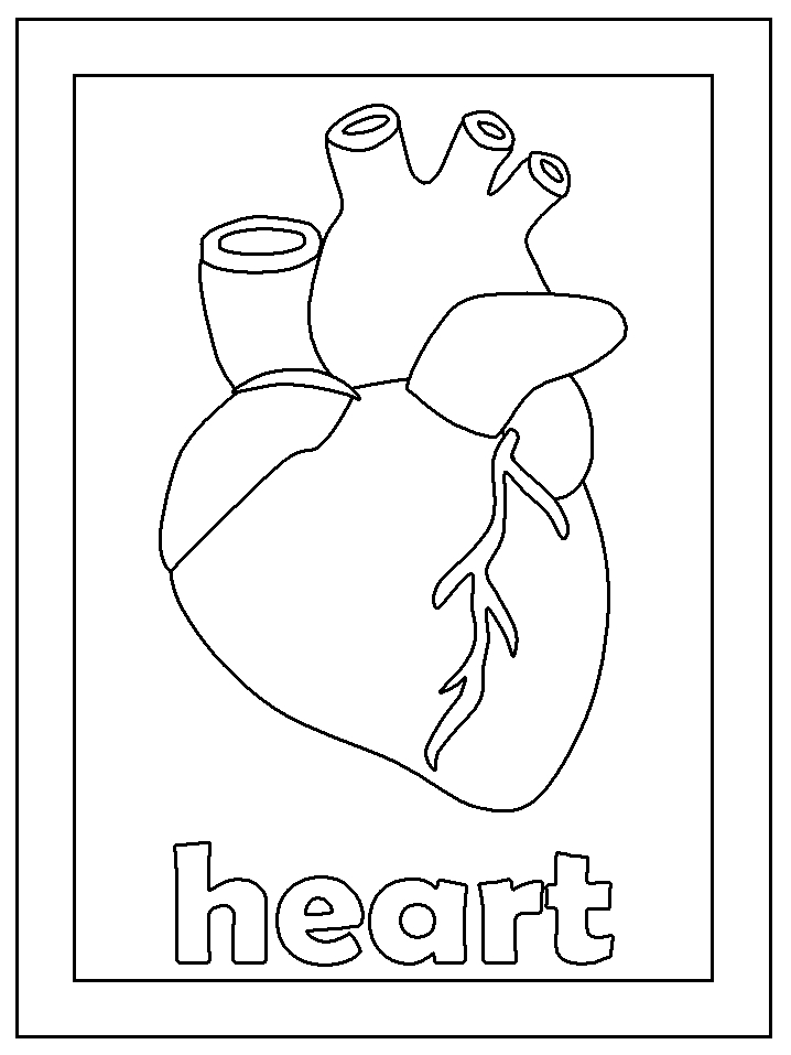 human heart coloring pages - human body coloring pages