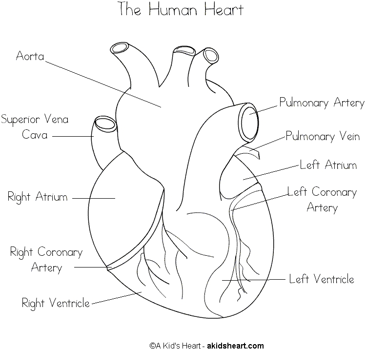 human heart coloring pages - hheartcolor2