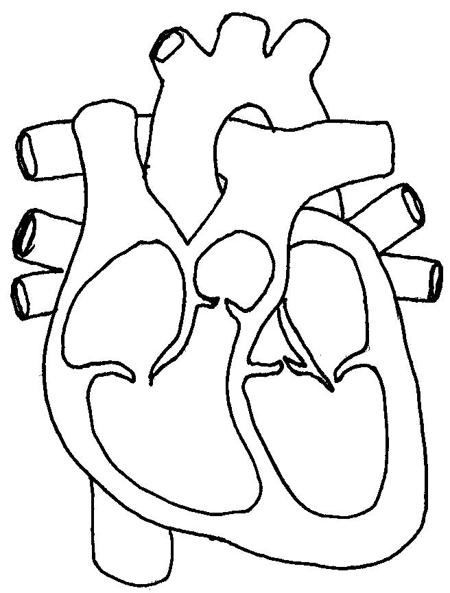human heart coloring pages - human heart coloring pages