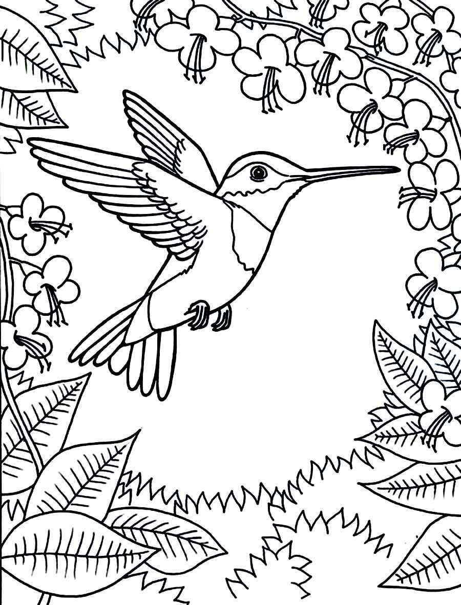 hummingbird coloring page - printable hummingbird coloring pages for kids