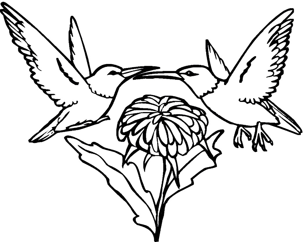 hummingbird coloring page - printable hummingbird coloring pages