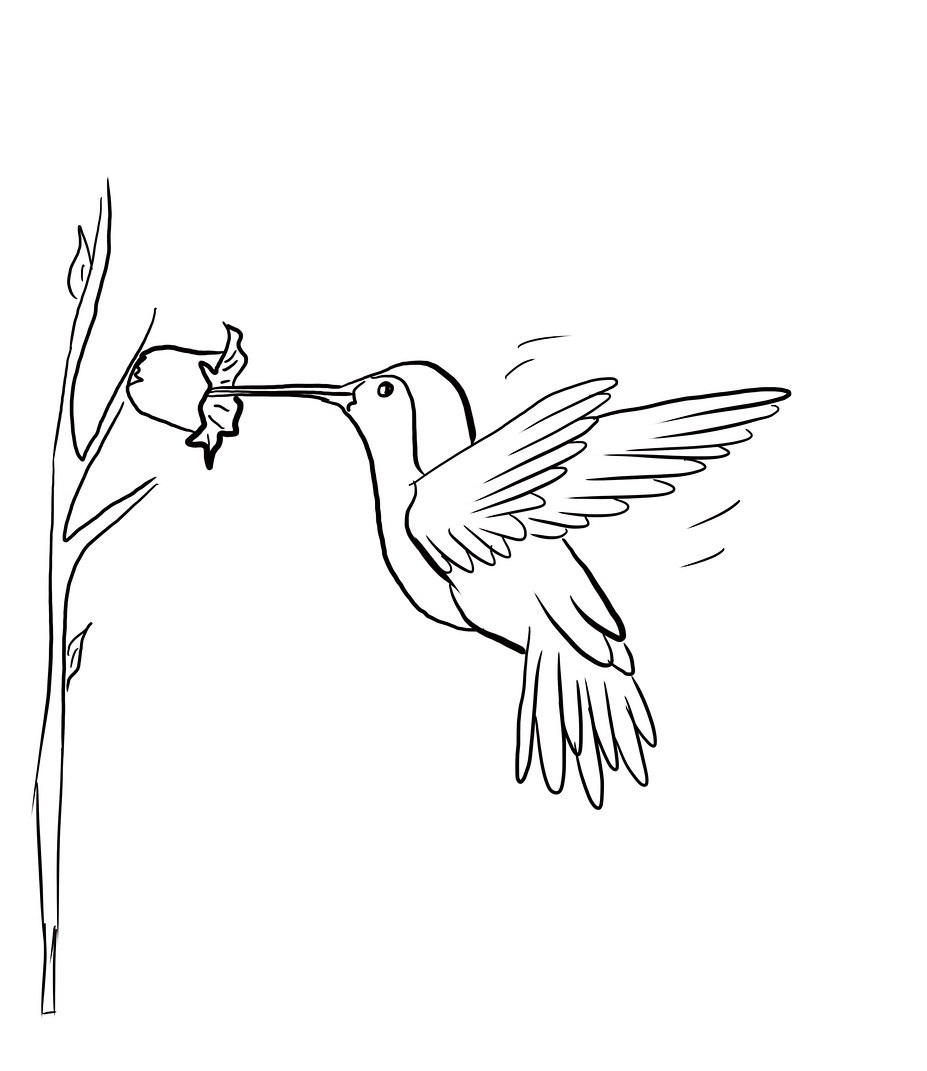 hummingbird coloring page - small coloring pages hummingbirds sketch templates