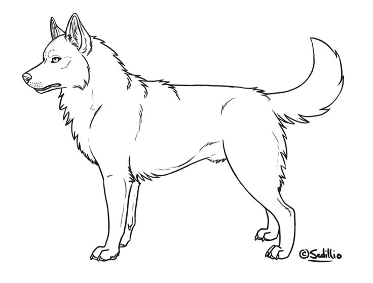 husky coloring pages - q=f husky