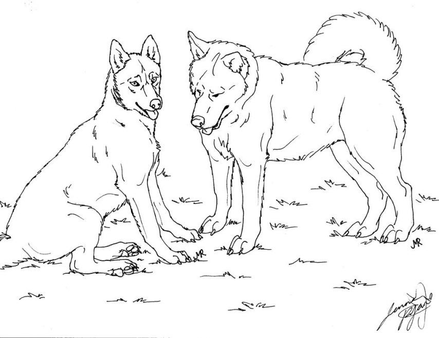 husky coloring pages - husky coloring pages