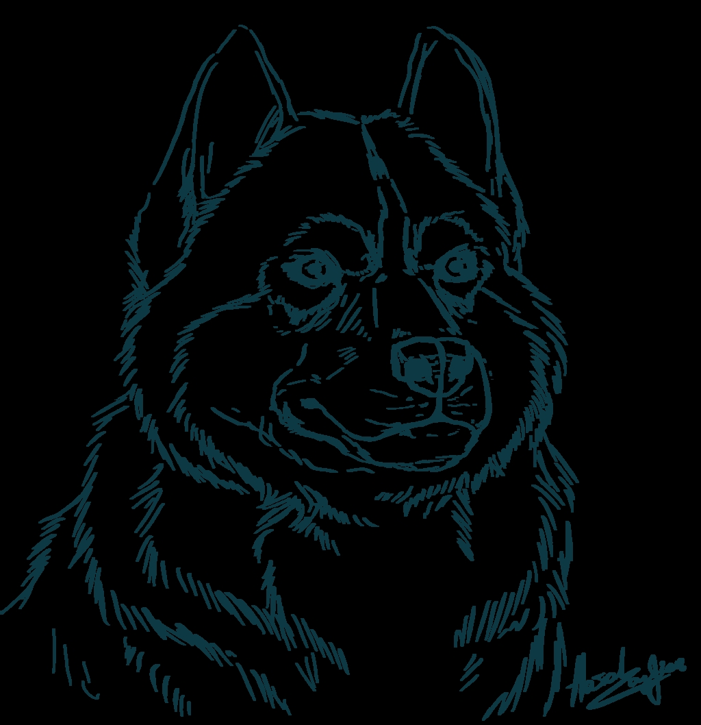 husky coloring pages - siberescue Kids Coloringpages Iamcute
