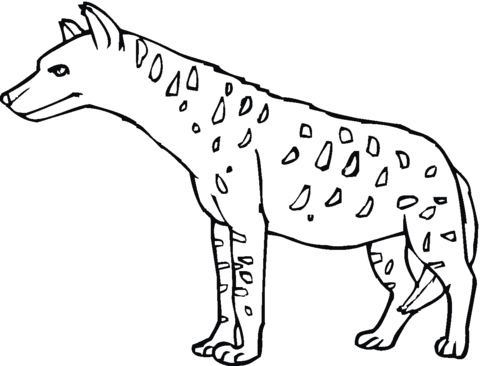 hyena coloring pages - hyena 17
