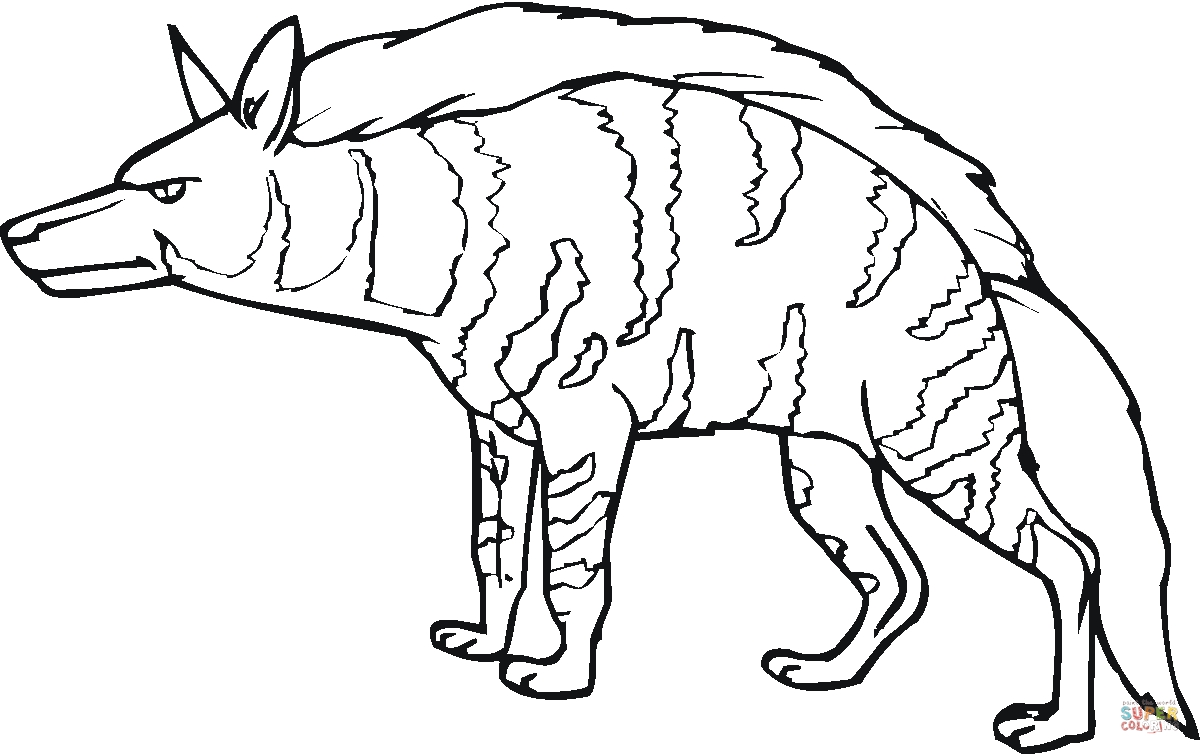 hyena coloring pages - hyena 16
