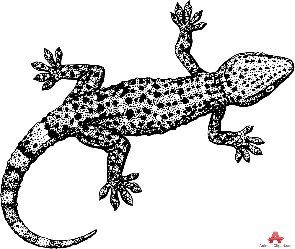 iguana coloring page - lizard clipart 2105