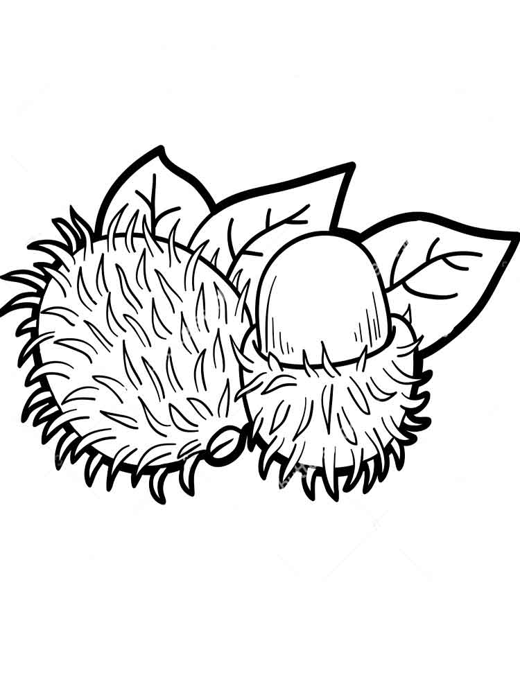 images of coloring pages - rambutan coloring pages
